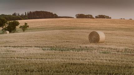 Fotoväggar - Landwirtschaft, Erntezeit, Sommerlandschaft