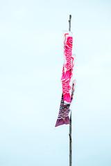 Koi fish flag