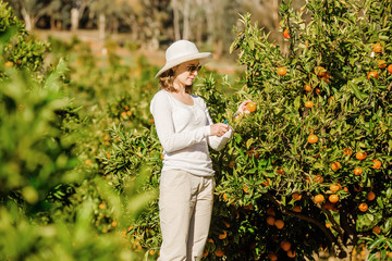 Caucasian girl harvesting mandarins and oranges in organic farm
