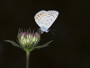 meraklı kelebek