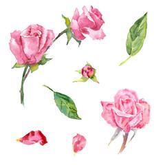 Watercolor rose (elements)