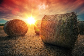 Wall Mural - Baled Hay Rolls at Sunset