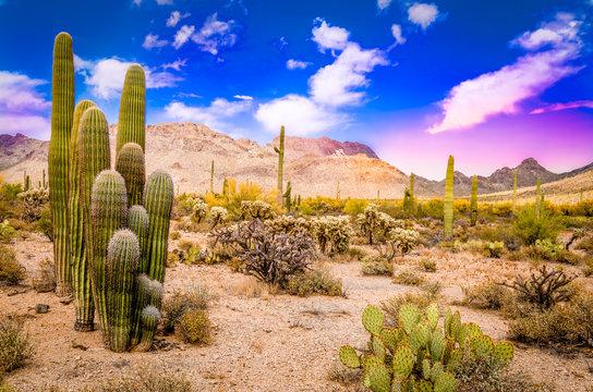 Arizona Desert Ladscape