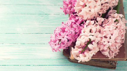 Fresh pink hyacinths on old books
