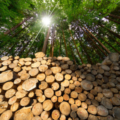 Wooden Logs with Forest on Background. Trunks of trees cut and stacked in the foreground, green forest in the background with sun rays