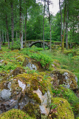 Old bridge in forest