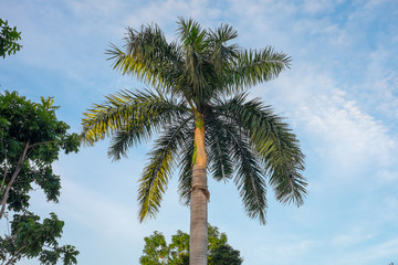 Palm tree in blue sky background
