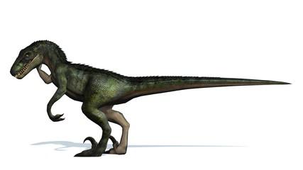 velociraptor dinosaurs - isolated on white background