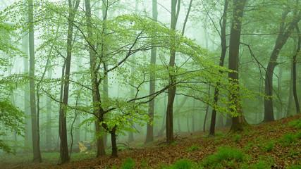Besondere Nebelwald Impression