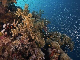 Red Sea reef impression