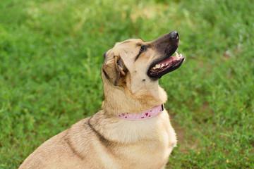 Happy dog closeup portrait