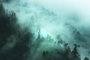 misty forest landscape in the mountains