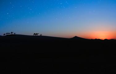 Travel vith camel, Abu Dhabi UAE