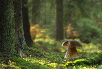 Boletus mushroom in forest