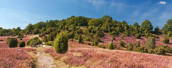 Weg durch Landschaft in der Lüneburger Heide, am Rand des Tales Totengrund bei Wilsede zur Zeit der Heideblüte