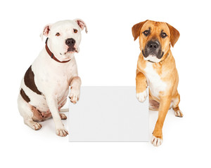 Wall Mural - Pit Bull Dog Offering Its Paw To Shake