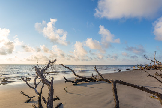 Driftwood Beach, Jekyll Island Georgia