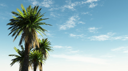 sky with palm trees