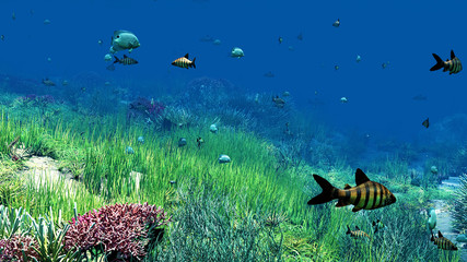Vidéo de l'érotique sous l'eau