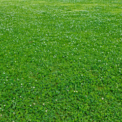 Grass on a glade