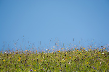 Background image - meadow, grass with sky