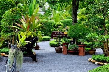 Bonsai garden in botanical park