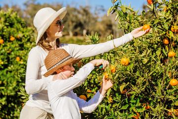 адрес обслуживает когда собирают урожай апельсинов в греции изображения Фото