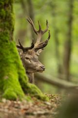 Photo sur Toile Cerf tête cerf tronc arbre