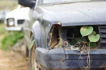 Carro velho com planta