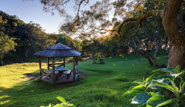 Aire de pique nique en forêt tropicale.
