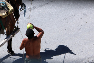 Brazilian man is refreshing with coconut water  on the street while holding rope of his horse