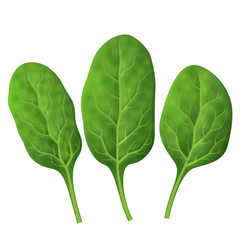 Spinach leaves close up. Fresh green spinach isolated on white