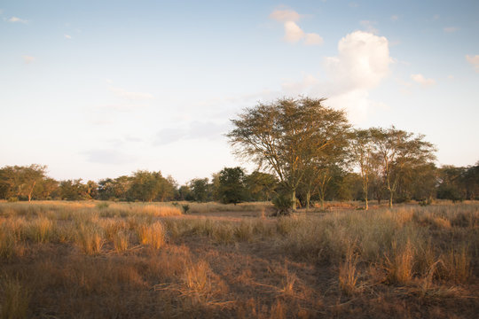 View over the savanna in the National Park Gorongosa in the center of Mozambique