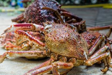 Spider Crabs close up