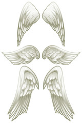 Angel wings on white