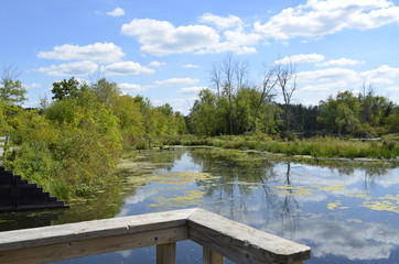 Swampy backwater view of the Thornapple River in Middleville, MI, USA