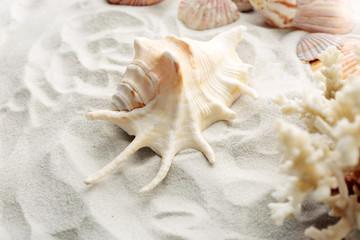 Beautiful seashells on sand background