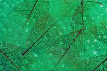 Keuken foto achterwand Decoratief nervenblad Green skeleton leaves background