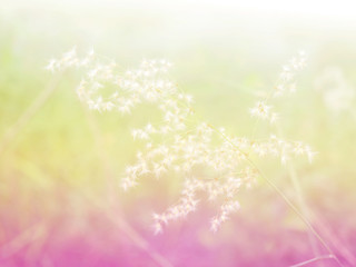 Abstract Blurry of grass Flower and colorful background. Beautiful flowers made with colorful filters.