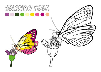 Butterfly coloring book page (Vector illustration)