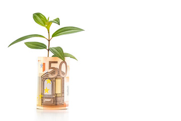 Concept of green plant grow on EURO currency note