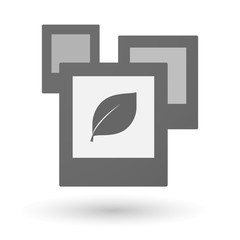 Isolated group of photos with a leaf