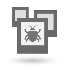 Isolated group of photos with a bug