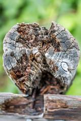 tree trunk close up