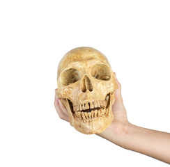 hand holding skull isolated on white background