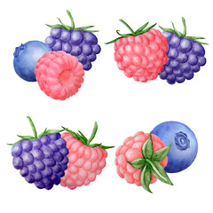 watercolor berries compoisitions