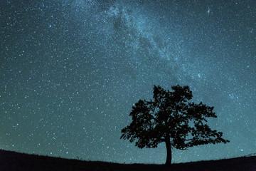 Printed kitchen splashbacks Night tree
