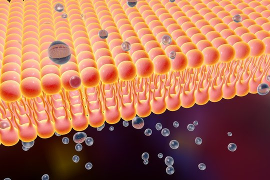 Cell membrane, lipid bilayer, digital illustration of a diffusion of liquid molecules through cell membrane, microscopic view of a cell membrane, biology background, medical background