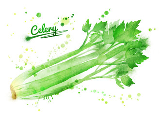 Watercolor celery.
