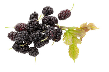 Mulberry fruit.